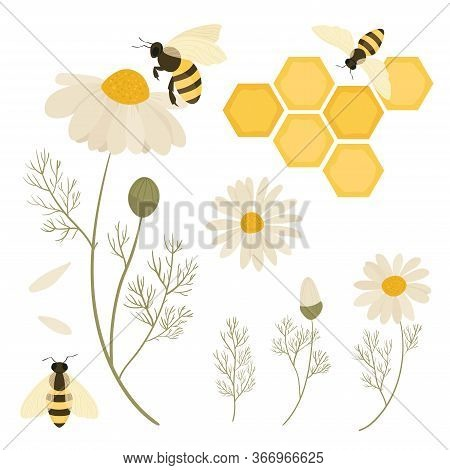 Bees And Flowers Chamomile. Save The Bees