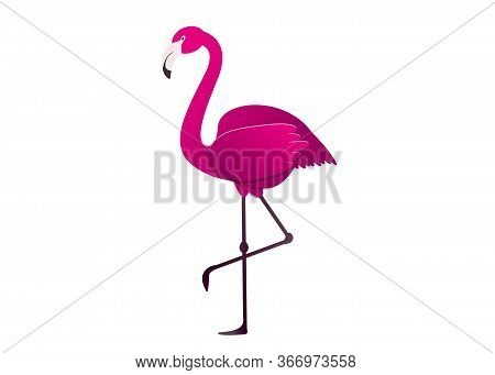 Vector Illustration Pink Flamingo. Exotic Bird. Cool Flamingo Decorative Flat Design Element. Lovely