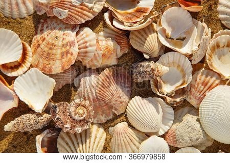A Lot Of Seashells On The Beach Sand, Seashell Summer Background, View From Top