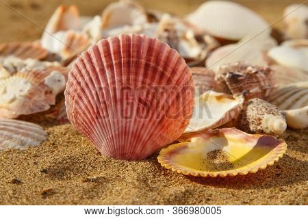 Big Red Seashell On The Beach Sand With Other Various Seashells, Seashell Summer Background, Close U