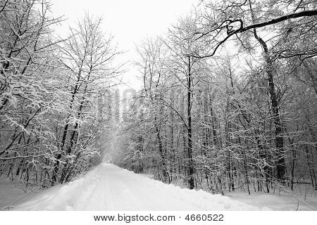 Trailway In Winter Forest