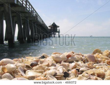 Shells On The Beach Near Pier