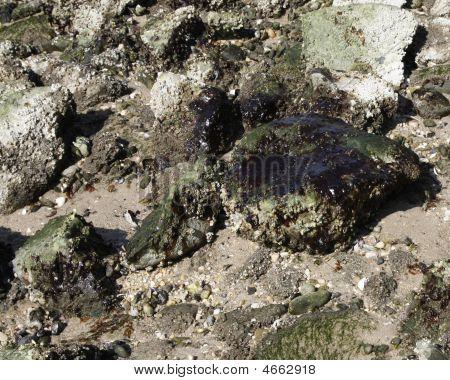 Oil Polluted Beach