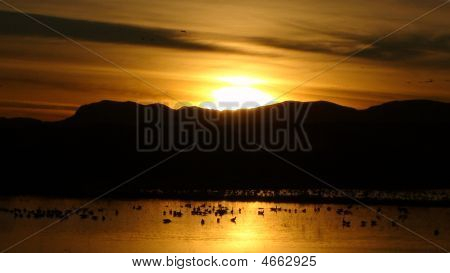 A picture of sunset at Bosque del Apache Reservation Socorro. Taken on 1/24/09 poster