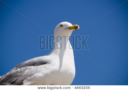 Seagull sands majestic on rooftop at the beach poster