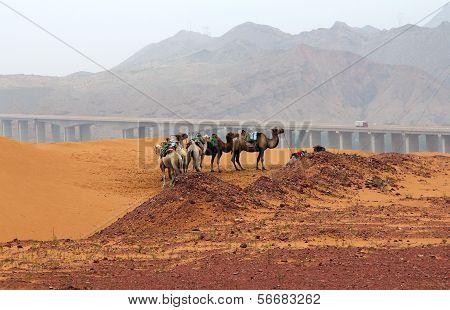 Landscape In Northwest Of China