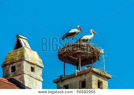 a stork's nest on a achornstein in rust. burgenland, austria