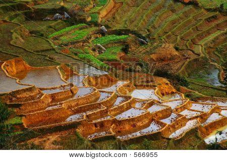 Agriculture An Madagascar