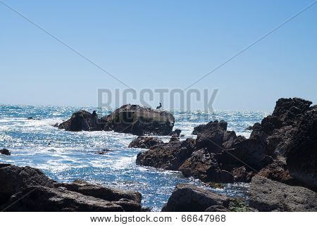 Pelican On Rocky Coast Of Mexico