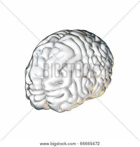 White  Brain