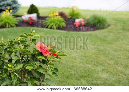Colorful Red Tropical Hibiscus Flower