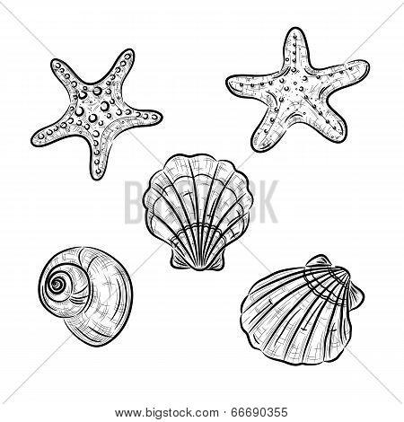 Aquatic fauna drawing