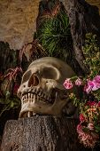 Still life with a human skull with desert plants cactus roses and dried flowers in a vase beside the timber. poster