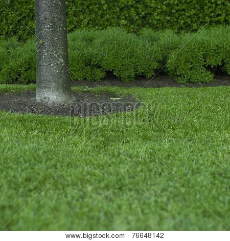 Green Grass And Tree Trunk