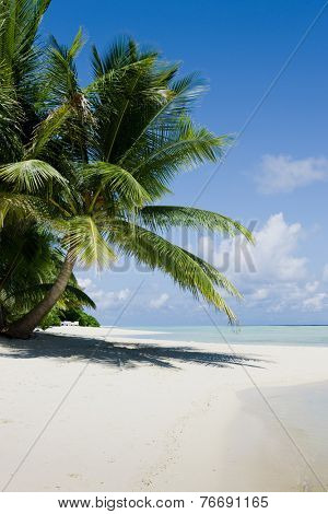 Green tree on white sand beach. Kuramathi island. Maldives.