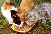 Three cats having a breakfast, high resolution poster