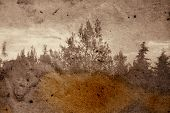 Vintage stained photograph of trees in forest. Abstract illustration. poster