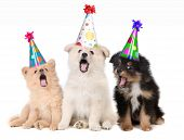 Humorous Puppies Singing Happy Birthday Song Wearing Silly Hats poster