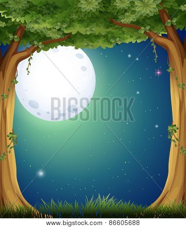 Forest at night with fullmoon background