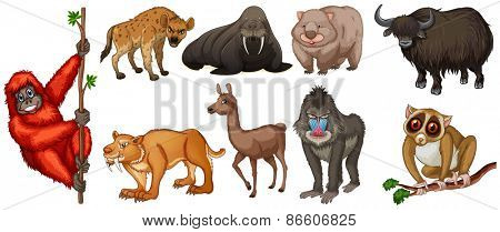 Different kind of wild animals around the world