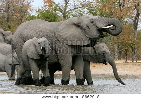 Elephant family waterhole