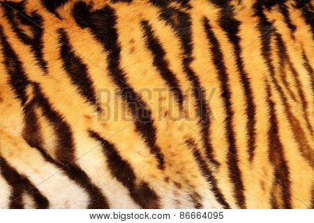 Beautiful Tiger Textured Fur