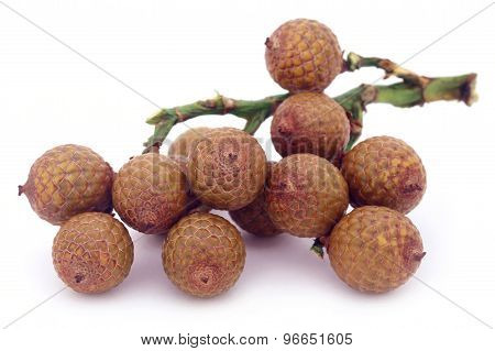Tropical Calamus Palm Fruits