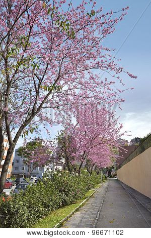 street with flowering trees