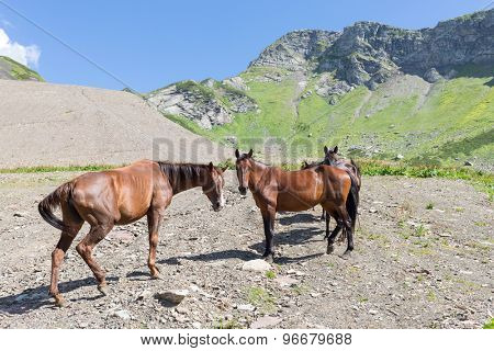 five horses standing on a mountain road