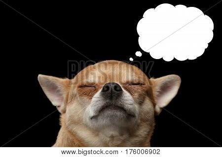 Chihuahua dog thinking with closed eyes, in bubble, isolated on Black background