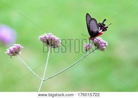 A butterfly feed flower with soft focus