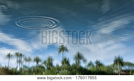Palm tree reflect off of a calm river as ripples move away from were a fish came to the surface.Turn up side down.