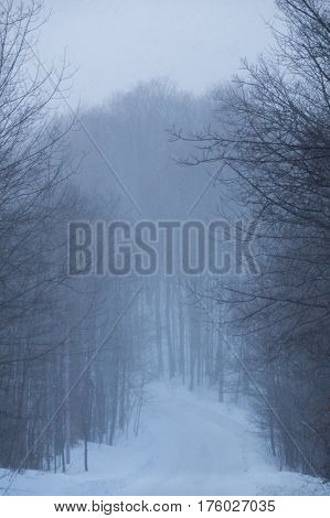 Snowy Road And Woodland Trees In A Snowstorm