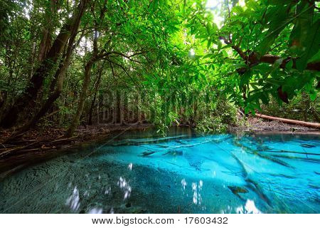 Pond with clear blue water in tropical forest