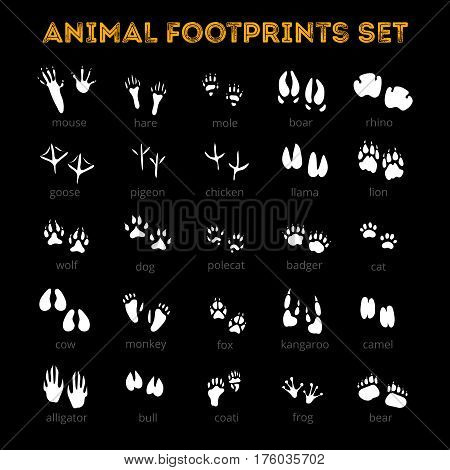 White tracks of different animals pets and birds isolated on black background flat vector illustration