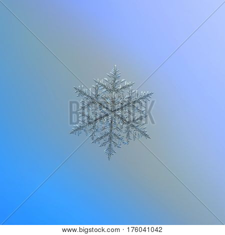 Macro photo of real snowflake: very large snow crystal of fernlike dendrite type with complex structure and good symmetry, six long, ornate arms with lots of side branches and icy