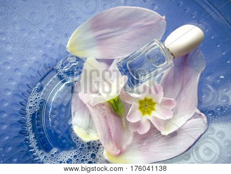 Close up of primrose flowers and petals floating in bowl of water with bottle of perfume. Spa theme.