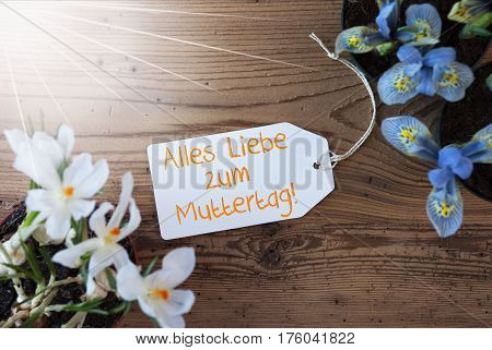Sunny Label With German Text Alles Liebe Zum Muttertag Means Happy Mothers Day. Spring Flowers Like Grape Hyacinth And Crocus. Aged Wooden Background