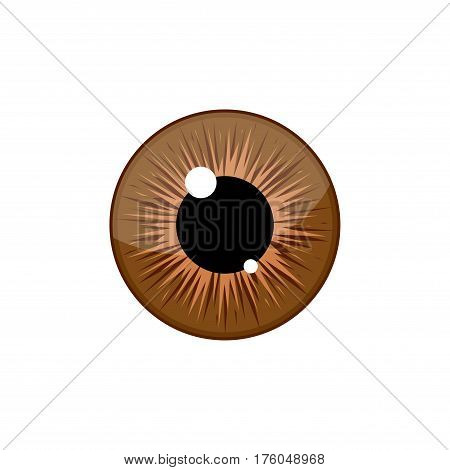 Human brown eyeball iris pupil isolated on white background. Eye Vector Illustration