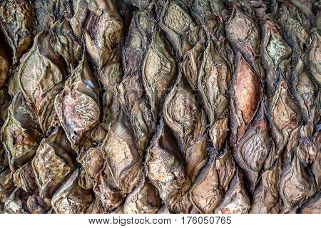Old palm tree or cycad bark macro photograph for closeup texture