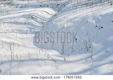 Unshaven nature - landscape in a lower layer of winter forest.