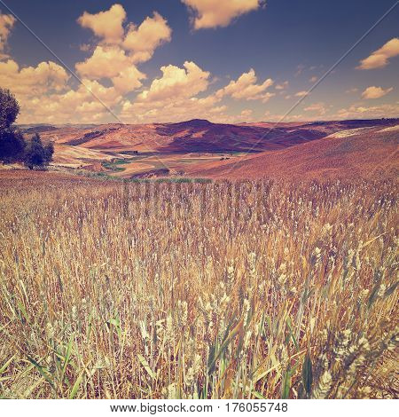 Wheat Fields on the Hills of Sicily at Sunset Instagram Effect