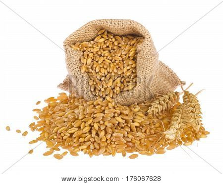 Sack of wheat grain isolated on white background