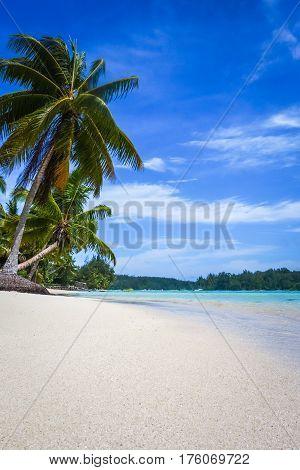 Paradise Tropical Beach And Lagoon In Moorea Island