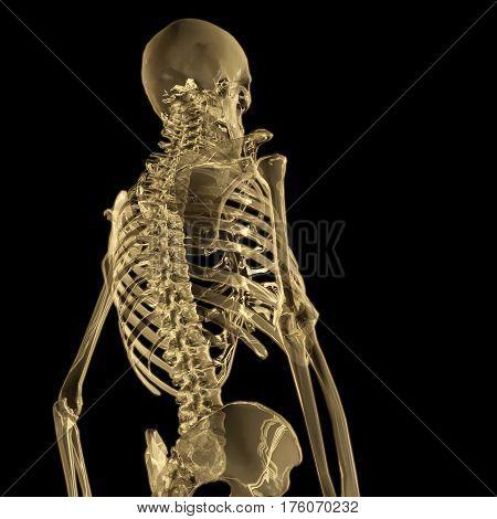 Digital 3D Rendering Of A Human Skeleton