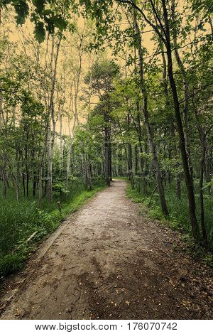The natural park of Groane (Milan Lombardy Italy). Path.