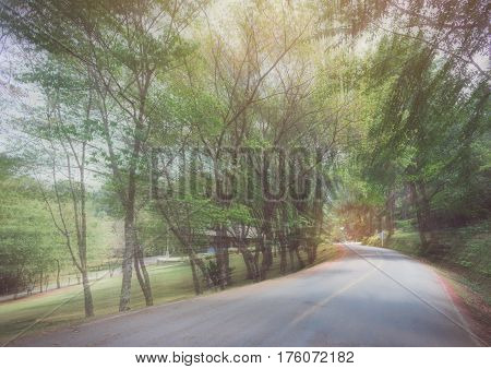abstract curve asphalt road with tree sideway in forest.