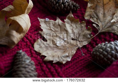 autumn leaves on a red chunky knit