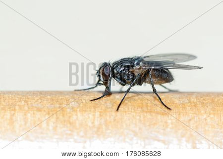 The fly sits on the surface. Focus on the eye