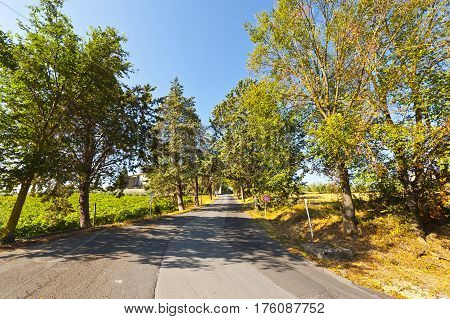 Asphalt Road between Vineyards and Olive Trees in Italy